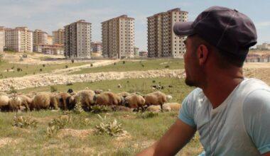 Gaziantep'te sürülen sürüler: Hayvancılığı bırakacağız
